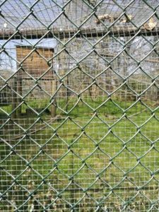 P9 Refocus, narrow aperture through wire fence
