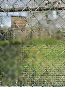 P9 Refocus, wide aperture through wire fence